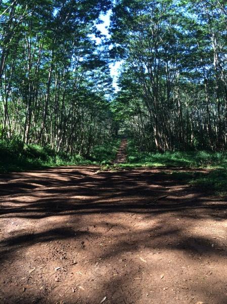 Kuamoo road swallowed by a vortex?